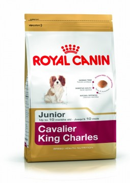 Cavalier King Charles Junior 1.5 kg